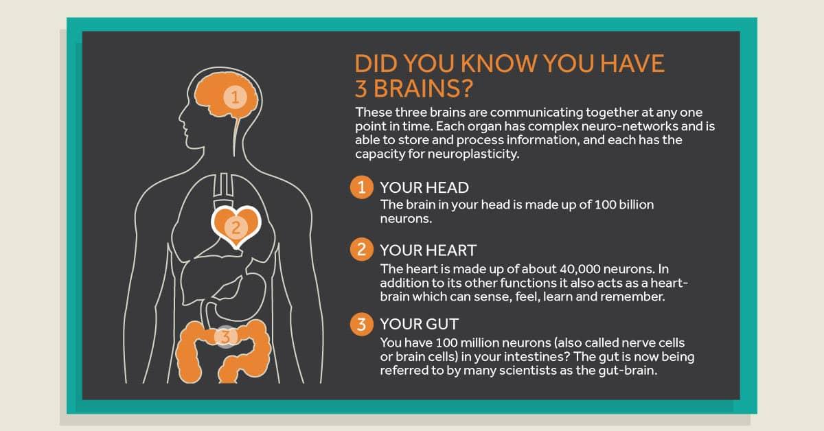 Head Brain Heart Brain Gut Brain